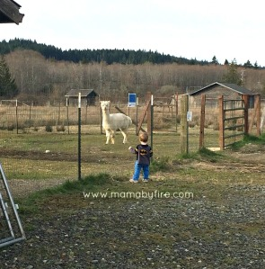 Discovering Washington Theler Center Wetlands R with Llama