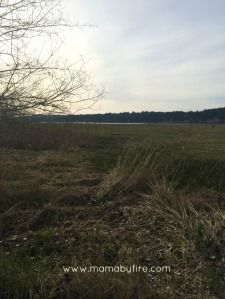 Discovering Washington Theler Center Wetlands Shot of wetlands