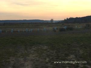 Discovering Washington Theler Center Wetlands Sunset