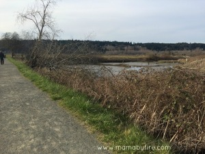Discovering Washington Theler Center Wetlands Trail and mud